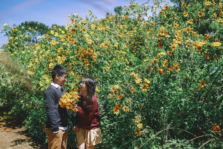 Ảnh cưới đẹp hoa dã quỳ Đà Lạt