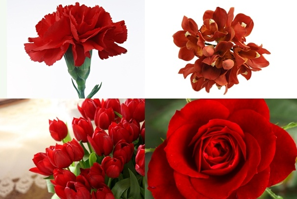carnation-011-tile
