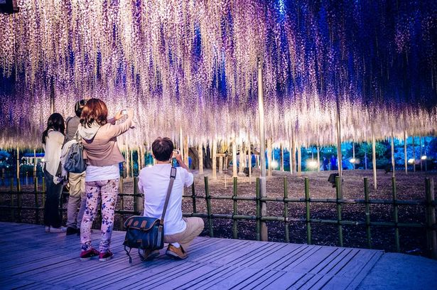 Công viên hoa Ashikaga 2