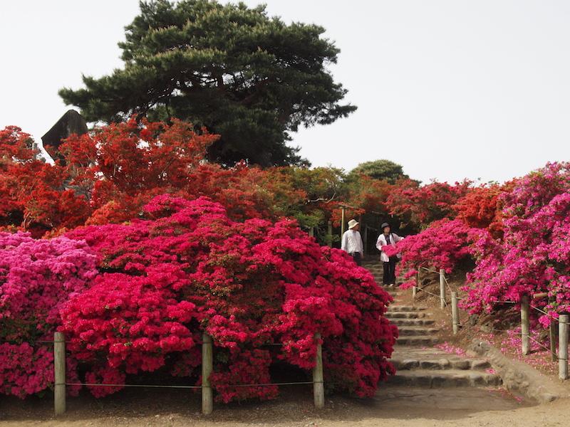 Công viên Tsutsjigaoka